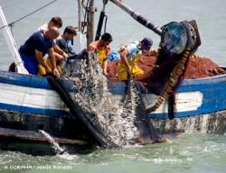 FishCopyright OCEANEA