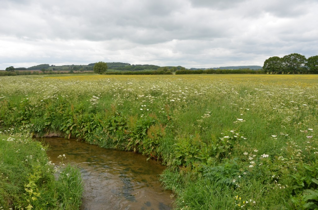 River Cam Gloucestershire; restored to health for wildlife, water management and landscape Copyright Gordon McGlone / GWT