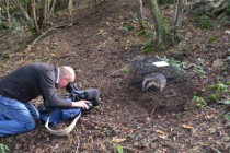 ITV film Gloucestershire Widlife Trust badger vaccination